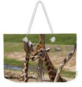Two Reticulated Giraffes  - Giraffa Camelopardalis Weekender Tote Bag
