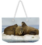 Walruses Resting On Ice Floe Weekender Tote Bag
