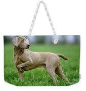 Weimaraner Dog Weekender Tote Bag