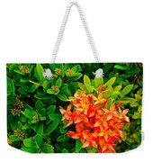 West Indian Jasmine In Sukhothai Historical Park-thailand Weekender Tote Bag