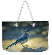Western Scrub Jay Thief Weekender Tote Bag