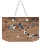 White-tailed Kite Siblings Weekender Tote Bag