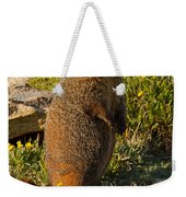 Yellow Bellied Marmot On Alert In  Rocky Mountain National Park Weekender Tote Bag