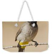 Yellow-vented Bulbul Pycnonotus Xanthopygos Weekender Tote Bag