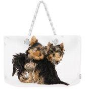 Yorkie Puppies Weekender Tote Bag