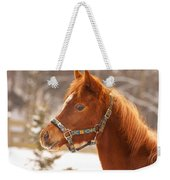 Young Horse In Winter Day Weekender Tote Bag