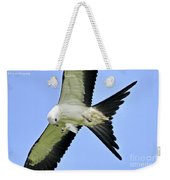 Young Swallow-tailed Kite Weekender Tote Bag