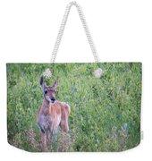 Pronghorn Antelope Portrait Weekender Tote Bag
