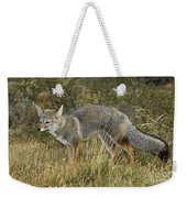 Patagonia Grey Fox Weekender Tote Bag