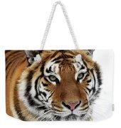 Tigre De Siberie Panthera Tigris Altaica Weekender Tote Bag