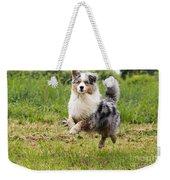 Australian Shepherd Dog Weekender Tote Bag