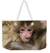 Baby Snow Monkey, Japan Weekender Tote Bag