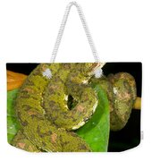 Eyelash Viper Weekender Tote Bag