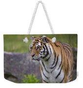Siberian Tiger, China Weekender Tote Bag