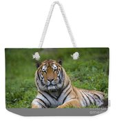Siberian Tiger, China Weekender Tote Bag