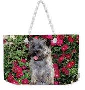 1990s Cairn Terrier Dog Standing Weekender Tote Bag