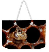 A Honeybee Hive After Colony Collapse Weekender Tote Bag