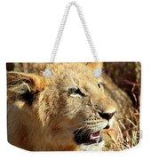 African Lion Cub Portrait Weekender Tote Bag