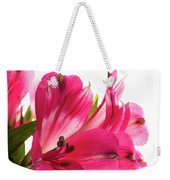 Alstroemeria Flowers Against White Weekender Tote Bag