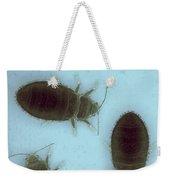 Bed Bugs Cimex Lectularius Weekender Tote Bag