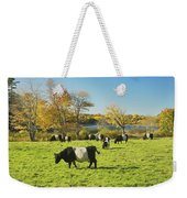 Belted Galloway Cows Grazing On Grass In Rockport Farm Fall Main Weekender Tote Bag