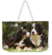 Bernese Mountain Dogs Weekender Tote Bag