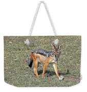 Black Backed Jackal Weekender Tote Bag