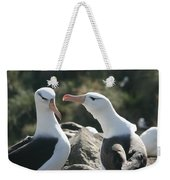 Black Browed Albatross Pair Weekender Tote Bag