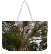 Cathedral Fig Tree Weekender Tote Bag