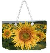 Common Sunflower Helianthus Annuus Weekender Tote Bag