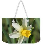 Cyclamineus Daffodil Named Jack Snipe Weekender Tote Bag