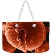 Dinoflagellate, Sem Weekender Tote Bag by David M. Phillips