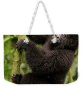 Endangered Mountain Gorillas Habitate Weekender Tote Bag