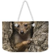 Golden Jackal Canis Aureus Cubs Weekender Tote Bag