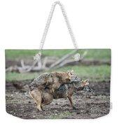 Golden Jackal Canis Aureus Weekender Tote Bag