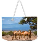 Group Of Camels In Africa Weekender Tote Bag