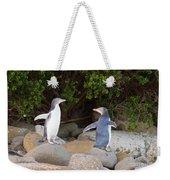 Juvenile Nz Yellow-eyed Penguins Or Hoiho On Shore Weekender Tote Bag