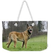 Malinois, Belgian Shepherd Dog Weekender Tote Bag