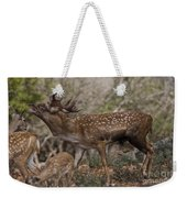 Mesopotamian Fallow Deer 3 Weekender Tote Bag