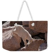 Mountain Goat Kid On Mount Evans Weekender Tote Bag