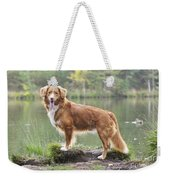 Nova Scotia Duck Tolling Retriever Weekender Tote Bag