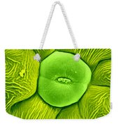 Stoma Of Loasa Plant, Sem Weekender Tote Bag