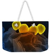Streptococcus Pyogenes Bacteria Sem Weekender Tote Bag by Science Source