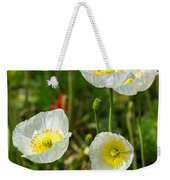 White Iceland Poppy - Beautiful Spring Poppy Flowers In Bloom. Weekender Tote Bag