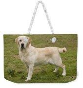 Yellow Labrador Retriever Weekender Tote Bag