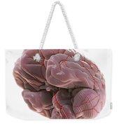 Brain With Blood Supply Weekender Tote Bag