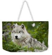 Arctic Wolf Weekender Tote Bag