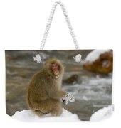 Japanese Macaque Weekender Tote Bag