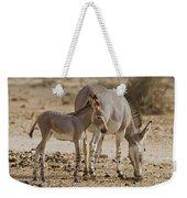 African Wild Ass Equus Africanus Weekender Tote Bag