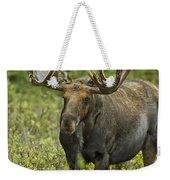 Bull Moose In Velvet  Weekender Tote Bag